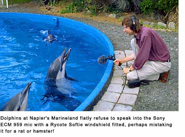 Clive Williamson with Dolphins in Napier Marineland