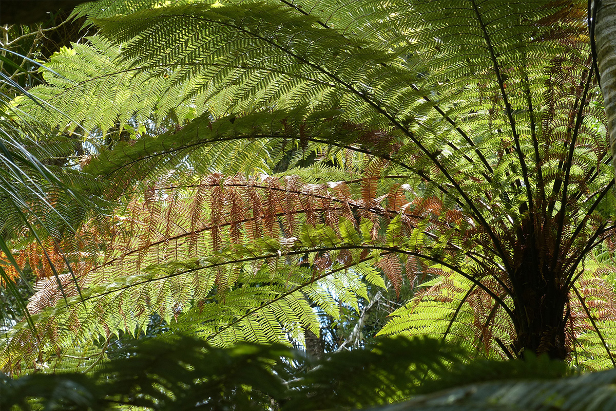 Ferns, New Zealand