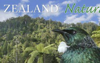 New Zealand Naturally Banner