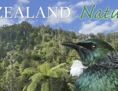 Nature Sounds from Symbiosis – New Zealand Naturally
