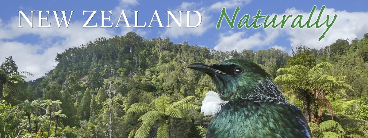 New Zealand Naturally Banner