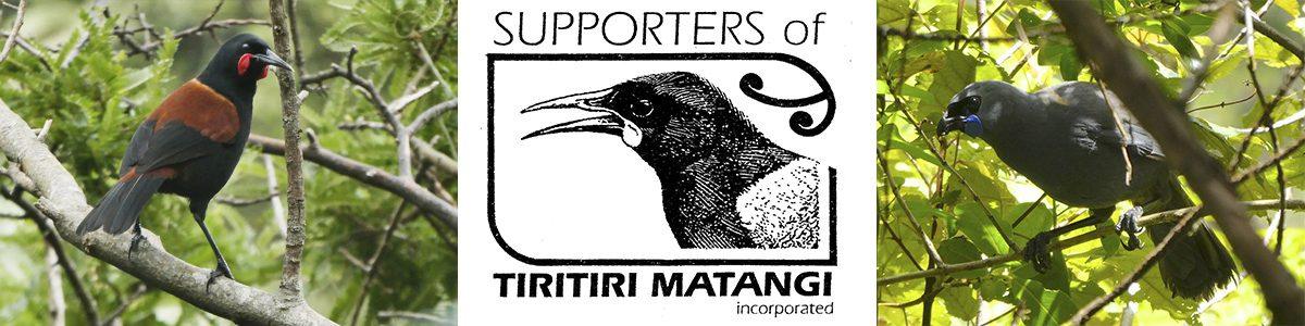 Tiritiri Matangi Island birds